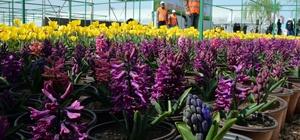 Diyarbakır 2 milyon çiçek ile renklenecek
