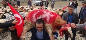 Arpaçaylılar, Afrin'deki Mehmetçiğe 400 canlı hayvan gönderdi