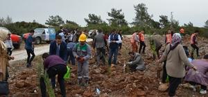 Milas'ta 'Şehit Astsubay Musa Özalkan' adına 'hatıra ormanı' oluşturuldu