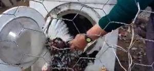 Çamaşır makinesini tavuklarına kümes yaptı