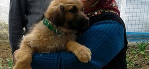 Köpek sevgisiyle sosyal medya fenomeni oldu