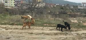 Başıboş köpeklerden mahalle sakinleri şikayetçi