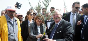 Gaziantep'te 'Zeytin Ormanı' kuruldu