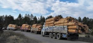 Odun üretiminde Zonguldak'tan 299 milyon liralık katkı