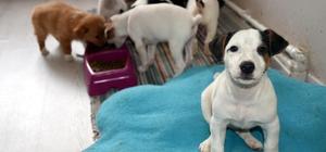 Kapıkule'de yavru köpekleri satın alan olmadı