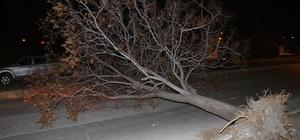 Erzincan'da şiddetli rüzgar ve fırtına