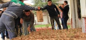Domaniç Orman İşletme Müdürlüğü, vatandaşlara gelir getirici fidan dağıttı