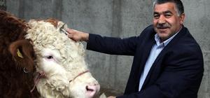 Erdoğan hayranı besici, araç ve evine bu pankartı astı