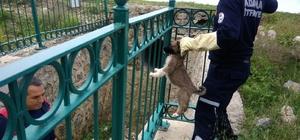 Dereye düşen yavru köpek kurtarıldı