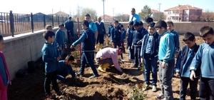Boğazlıyan'da öğrenciler okul bahçesine gül dikti