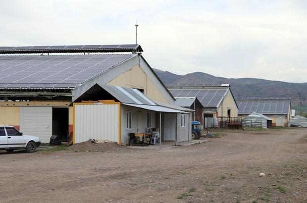 Ahırlarda elektrik üretiyorlar Büyükbaş hayvan yetiştirmek için kurduğu iş yerinde tüketeceği enerjiyi kendisi üretmeye kalkınca enerji satan bir firma haline geldi