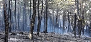Boyabat'ta orman yangını