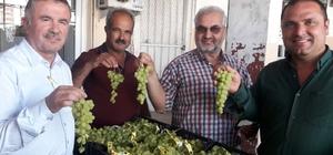 Mersin'de üzüm hasadı Turfanda üzümün kilosu 15 ile 20 liradan alıcı buldu