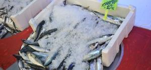 Tezgahlar dondurulmuş balığa kaldı