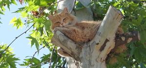 Ağaçta mahsur kalan kedi itfaiye ekibince kurtarıldı