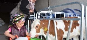 Minik Meryem'in hayvan sevgisi imrendiriyor 1,5 yaşındaki minik kız, çizmesi ve şalvarıyla çiftliğin maskotu oldu