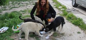 Okul müdiresi her gün sokak hayvanlarını besliyor Elazığ'da bir okulun müdiresi, otomobilinin bagajına koyduğu mamalarla her gün geçtiği güzergahta karşılaştığı sokak hayvanlarını besleyerek örnek bir davranış sergiliyor