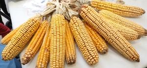 Çiftçiler yerel tohumlarını takas etti