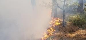 Sütçüler'deki yangında 3 hektar ormanlık alan zarar gördü