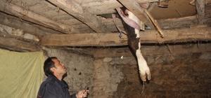 Evde inek kurtarma operasyonu Ayağı evin tahtalarına sıkışan ineği itfaiye kurtardı