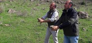 Van'da 73 kınalı keklik yeniden özgürlüğüne kavuştu