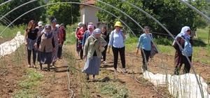 Muğla'nın yenilebilir otları tanıtılıyor Gıda tarım ve Hayvancılık İl Müdürlüğü tarafından yürütülen 'Tat, tanı ve Doğada Bırak' projesi kapsamında Muğla'nın yenilebilir otlarının tanıtımı yapılıyor.