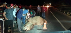 Yola çıkan deveye otomobil çarptı, 4 kişi yaralandı