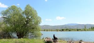 Kültür ve doğa turizminin birleştiği nokta: Şebinkarahisar