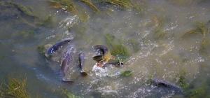 Çırpınan balıklar önce panikletti sonra sevindirdi