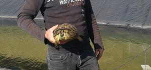 Gölete düşen 6 köpek ve 2 kaplumbağa kurtarıldı Hayvanları telef olmaktan belediye ekipleri kurtardı