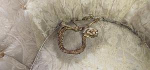 Bingöl'de ilginç hayvan iskeleti