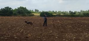 Kayıp şahsın cesedini iz köpeği buldu Adana'da kaybolan bir kişinin cesedi Grow isimli iz takip köpeği tarafından bulundu