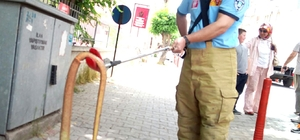 Şehrin merkezinde 'oluklu kertenkele' yakalandı Vatandaşlar tarafından ayakları olmadığı için yılan sanılarak öldürülüyor