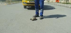 Temizlik ekiplerinin kaplumbağa duyarlılığı