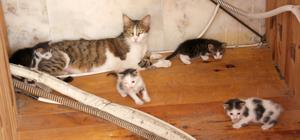 Camide yuva yapan kedi ve yavruları barınakta