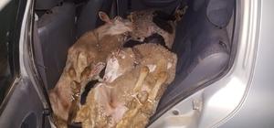 Çaldıkları koyunları arabada bırakıp kaçtılar Arabada havasız kalan koyunlar boğulmaktan son anda kurtuldu