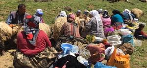 Dağlara terör yerine huzur geldi Huzurun hakim olduğu Kato Dağı'nda Berivanlar yaylaya çıktı Yaylaya çıkan köylüler Kato Dağı'nın zirvesinde süt sağdı