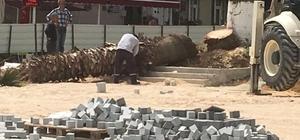 """Mudanya'da kesilen ağaçlar ortalığı karıştırdı... CHP'li Mudanya Belediyesi meydan düzenlemesi kapsamında biri 100 yaşına yaklaşmış iki ağacı kesti, Ak Partili yöneticiler sert tepki gösterdi AK Parti Mudanya İlçe Başkanı Murat Ünal, düzenlemenin Anıtlar Kurulu'ndan izin alınmadan yapıldığını öne sürerken, """"Ağaç kesmeyeceğim"""" diye tabela diktiler. Ancak yangından mal kaçırır gibi burada 2 güzel ağacı kestiler"""" dedi AK Parti Bursa Milletvekili Bennur Karaburun da, """"Her fırsatta ağaç üzerinden, yeşil üzerinden provokasyon çıkartmaya çalışan Chp Bursa Milletvekillerini kendi belediyelerine karşı """"direnmeye"""" davet ediyorum"""" diye konuştu"""