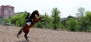 Jandarmanın atları özel görevler için hazırlanıyor Turistlerin güvenliğini sağlayan atlar Nevşehir'de eğitiliyor Atlı Jandarma timleri turistlerin güvenliğini sağlıyor