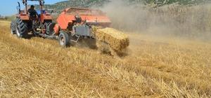 Çukurova'da saman balyalama mesaisi başladı Osmaniye'de buğday hasadını gerçekleştiren çiftçilerin altın değerinde gördükleri saman balyalama mesaisi başladı