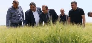 Ekili arazilerde süneyle mücadele çalışmaları başladı Aksaray'da süne mücadelesi kapsamında ekili arazilere inen ekipler kontroller yaparken, çiftçilerin de arazilerini kontrol etmesi isteniyor
