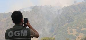 GÜNCELLEME - Aydın'da orman yangını