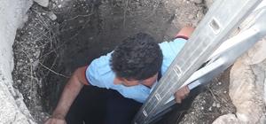 Mardin'de keçi kurtarma operasyonu