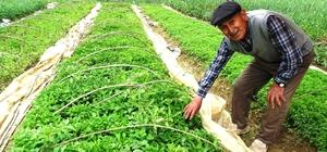 Hasanlar köyü sebze fidesi deposu