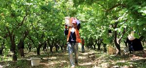 Suriyeli tarım işçilerinin zorlu ramazan mesaisi