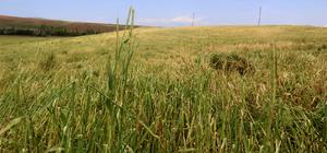 Kırşehir'de dolu yağışı tarım arazilerini olumsuz etkiledi