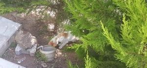Yavrusu foseptik borusuna düşen anne kedinin çaresizliği yürek sızlattı