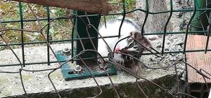 (ÖZEL) Kafası tellere sıkışan yavru kediyi itfaiye kurtardı
