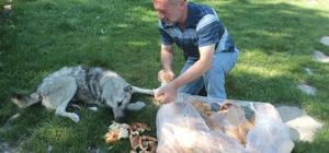 Kırsaldaki sahipsiz köpekleri besliyor