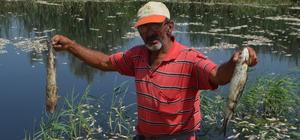 Aydın'da toplu balık ölümleri
